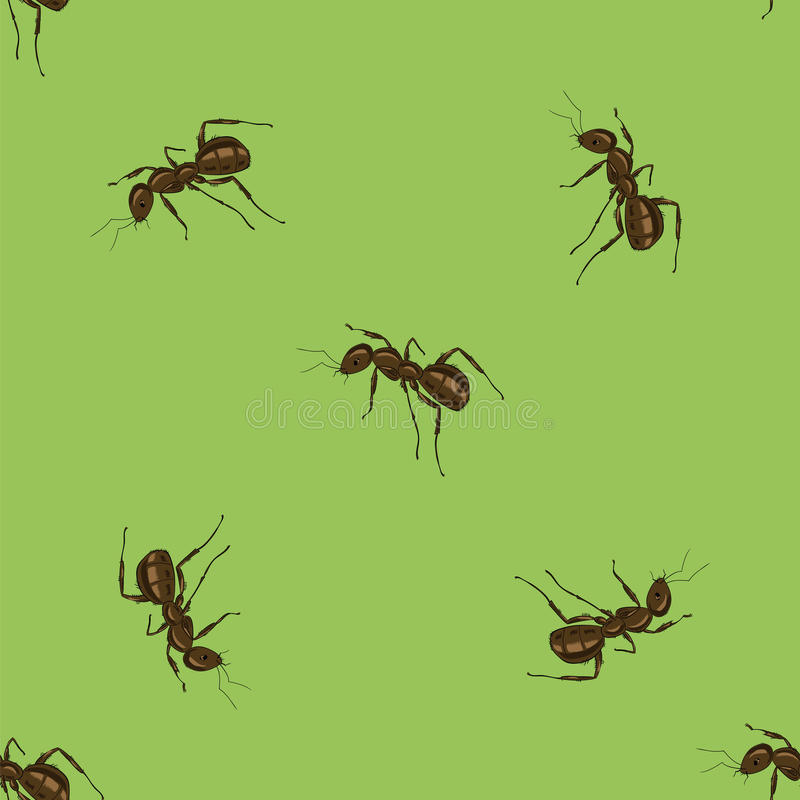 zwierzęcia bezszwowy deseniowy mrówka ilustracja wektor
