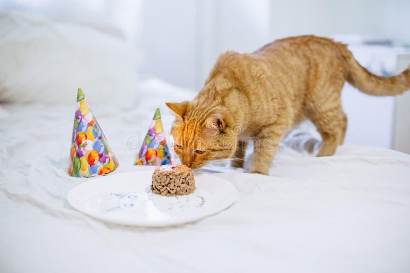 Zwierzęcia domowego jedzenia tort dla kota urodziny zdjęcia stock