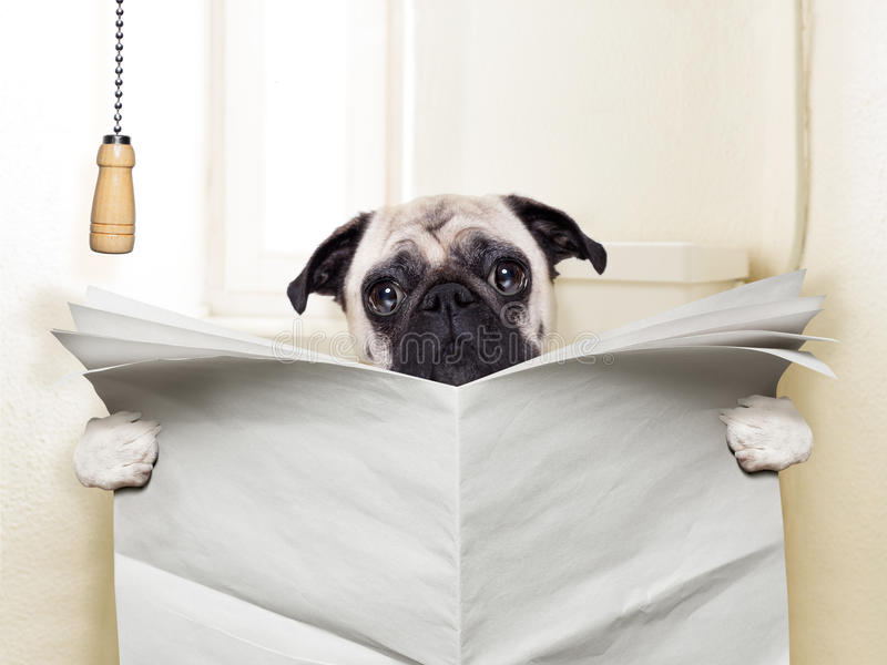 zwierzęcia domowego s toalety szkolenie zdjęcie stock