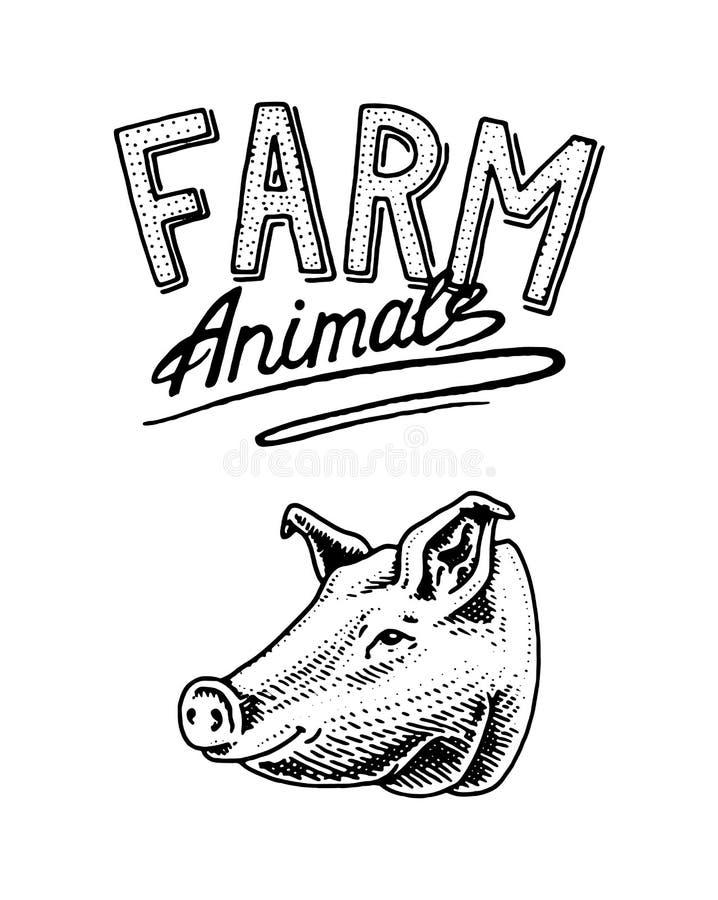 7 zwierzęcia kreskówki gospodarstwa rolnego ilustraci serii Głowa domowa świniowata wieprzowina Logo lub emblemat dla signboard i ilustracja wektor