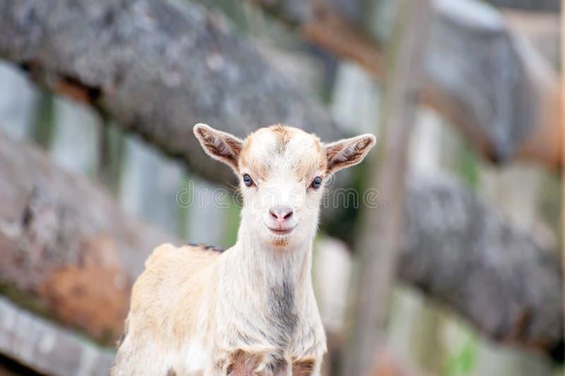 zwierzęcy dzieciak fotografia royalty free