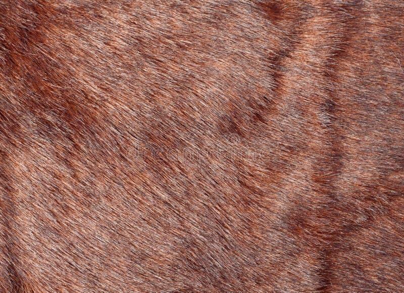 zwierzęcy futerko fotografia royalty free