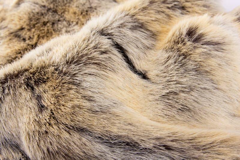 zwierzęcy futerko obraz stock