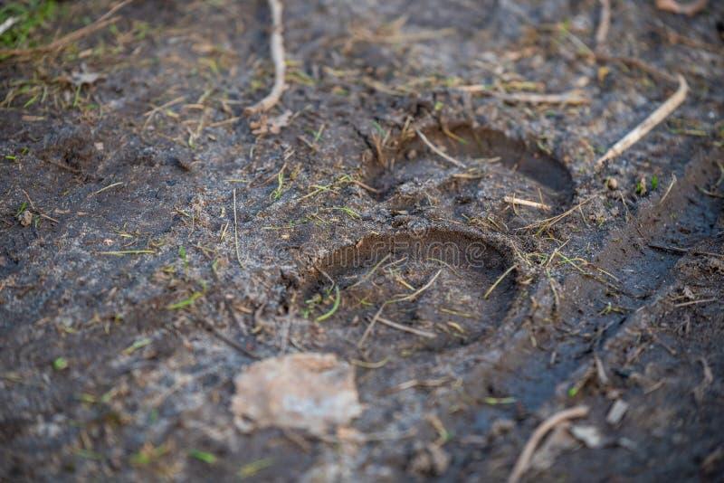 Zwierzęcy mali odciski stopi na podłodze obrazy royalty free