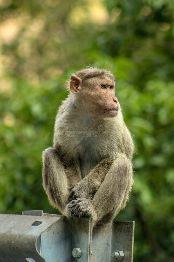 Zwierzęcy portret zdjęcie stock