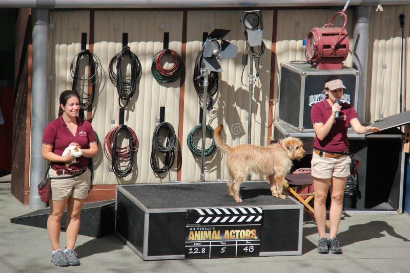 Zwierzęcy przedstawienie przy universal studio Hollywood zdjęcia royalty free