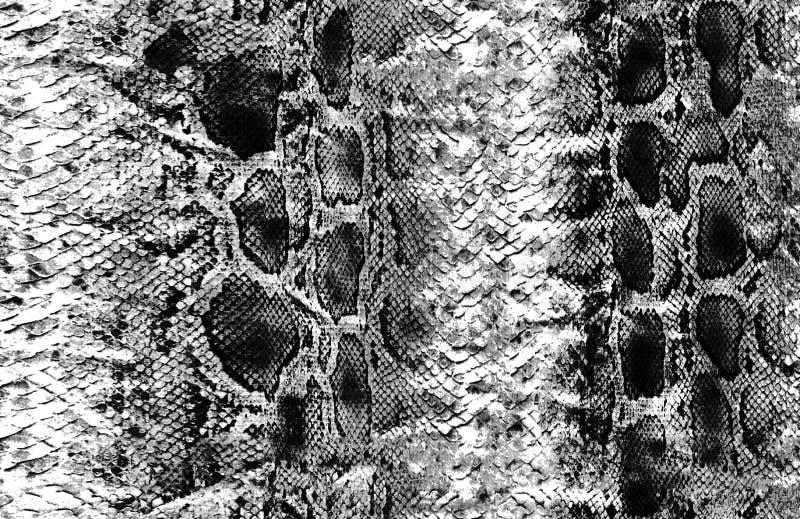 Zwierzęcy wąż skóry powierzchni wzór royalty ilustracja