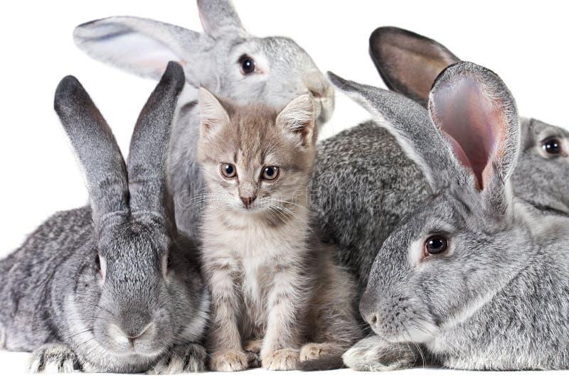 zwierzęta śliczni zdjęcia royalty free