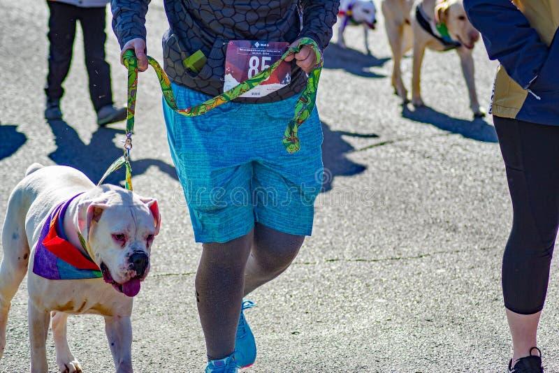 Zwierzęta domowe, piechurzy i biegacze, zdjęcia royalty free