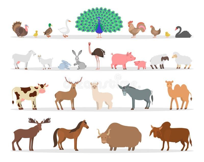 Zwierzęta gospodarskie i ptaka set Kaczka i cakle ilustracji