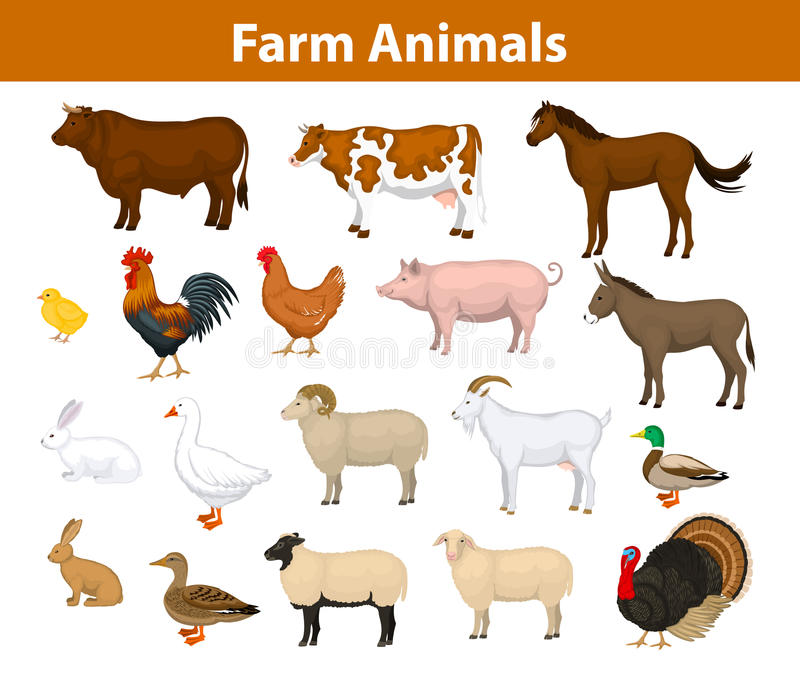 Zwierzęta gospodarskie inkasowi ilustracja wektor