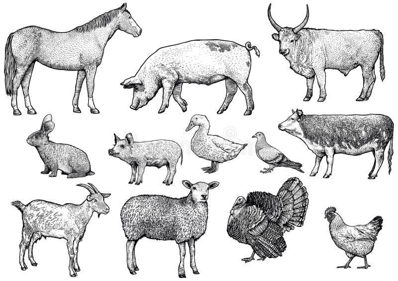 Zwierzęta gospodarskie ustalona ilustracja, rysunek, rytownictwo, kreskowa sztuka, realistyczna zdjęcia royalty free