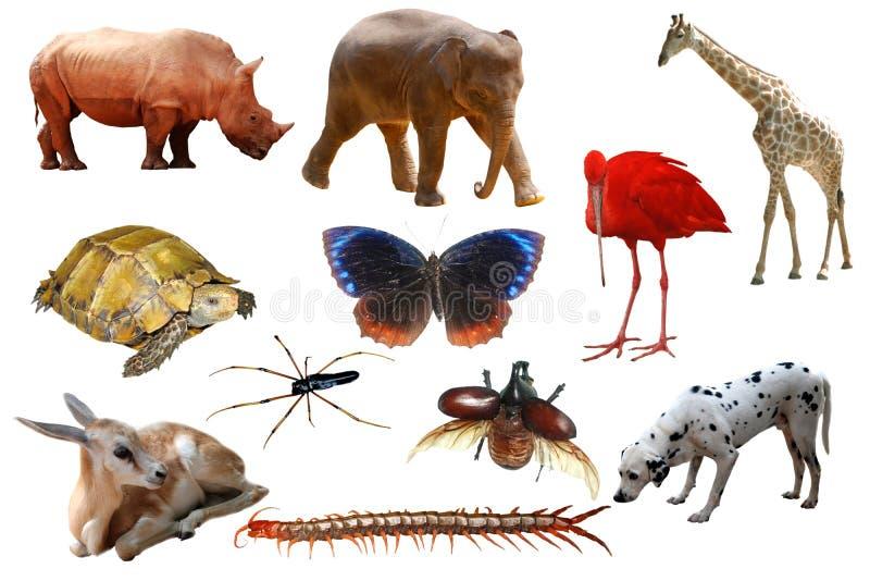 zwierzęta inkasowi ilustracja wektor