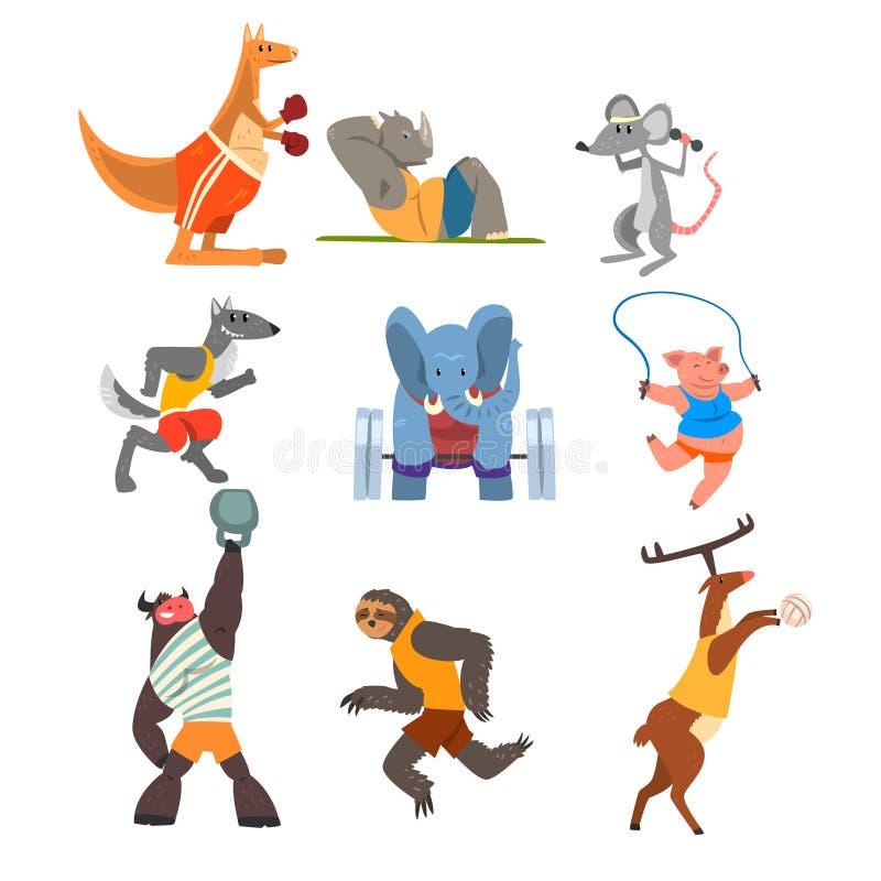 Zwierzęta robi ćwiczeniu, kangur, hipopotam, wilk, słoń, świnia, byk, opieszałość i rogacz w, gym, sprawności fizycznej i zdrowym royalty ilustracja