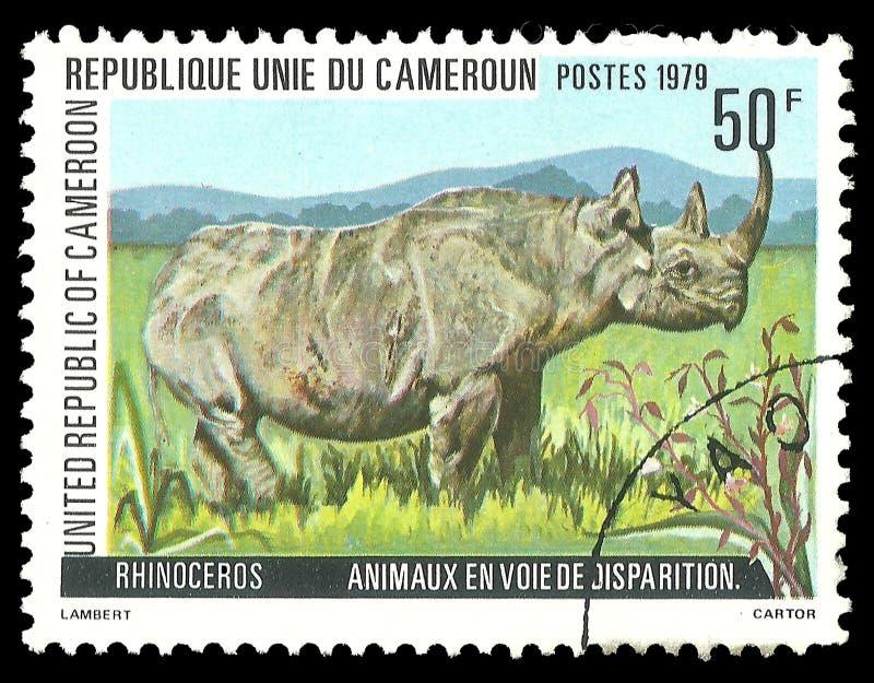 Zwierzęta, ssaki, Czarna nosorożec fotografia royalty free