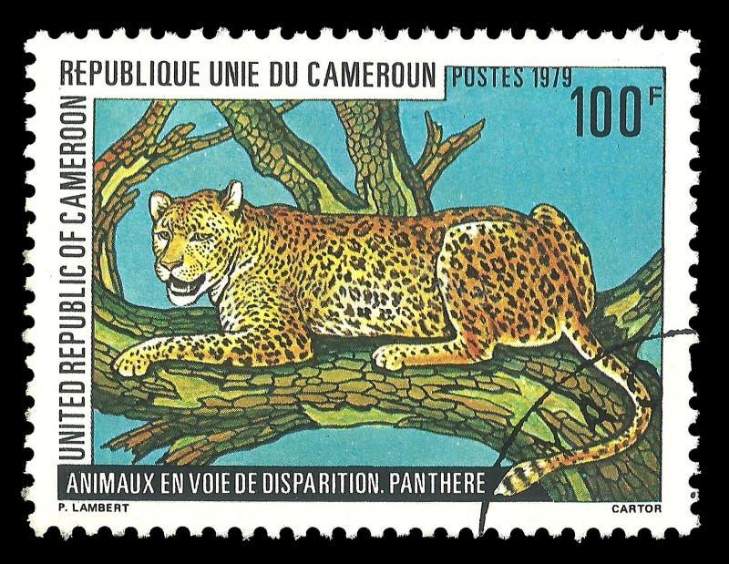 Zwierzęta, ssaki, lampart obraz royalty free