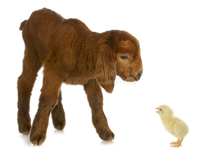 zwierzęta uprawiają ziemię nowonarodzonego zdjęcia stock