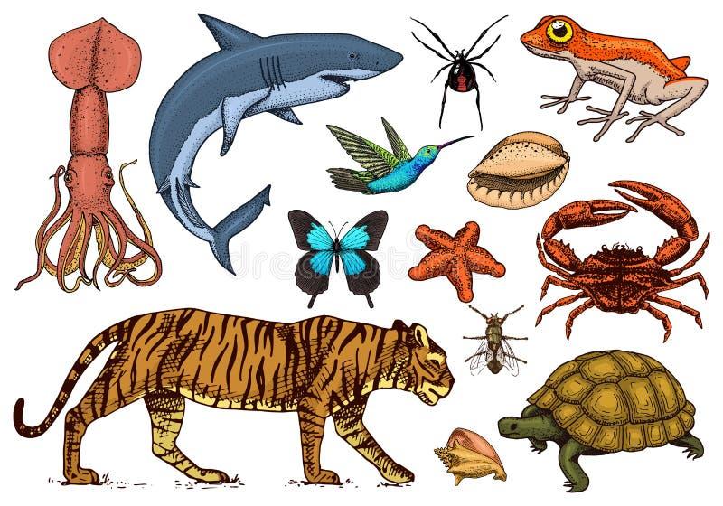 zwierzęta ustawiający Gad, amfibia, ssak i insekt, dziki żółw Grawerująca ręka rysująca Stary rocznika nakreślenie bug ilustracja wektor