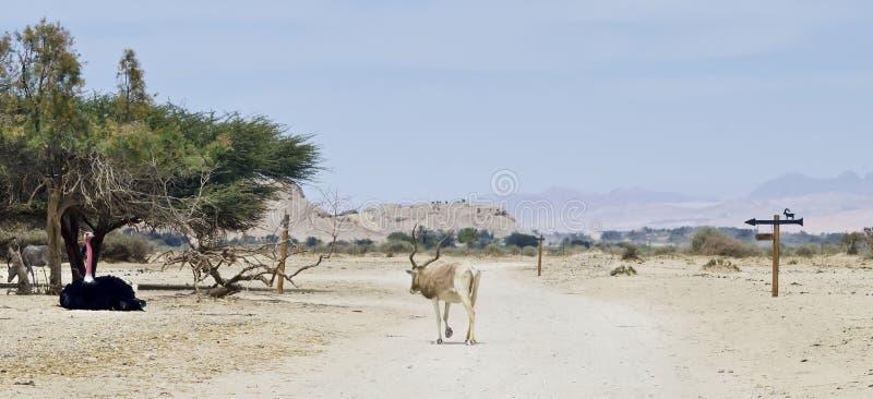 zwierzęta zakazują hai Israel rezerwat przyrody zdjęcie royalty free