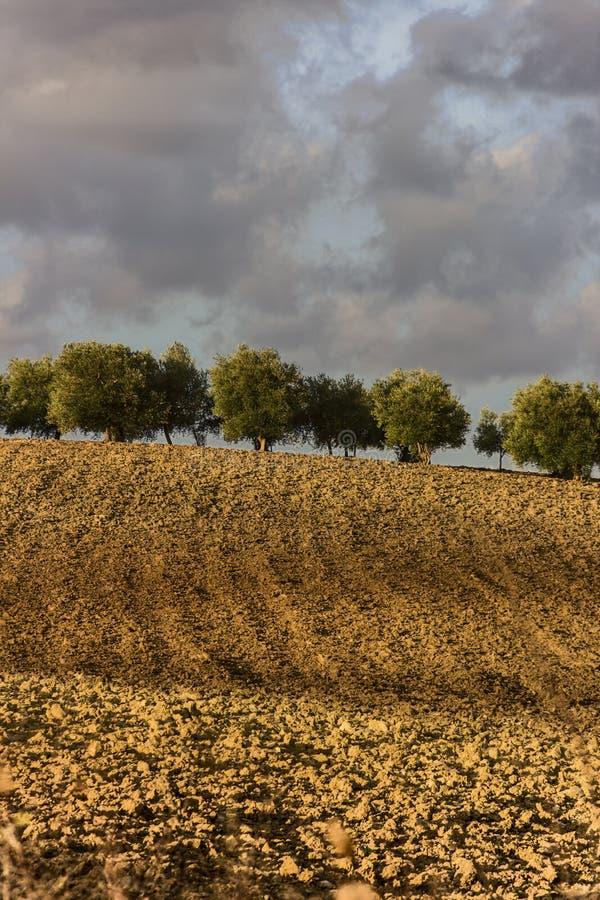 Zwischen Apulien und Basilikata: hügelige Landschaft mit Olivenhain auf gepflogenem Land herrschte durch Wolken, Italien vor lizenzfreie stockfotografie