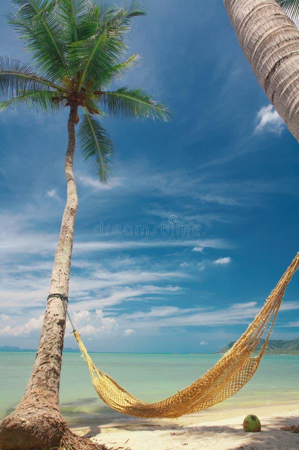 Zwischen den Palmen lizenzfreies stockfoto