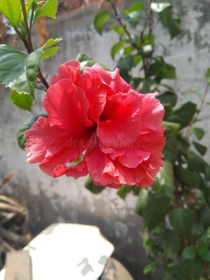 Zwitschert die Blume lizenzfreie stockfotos