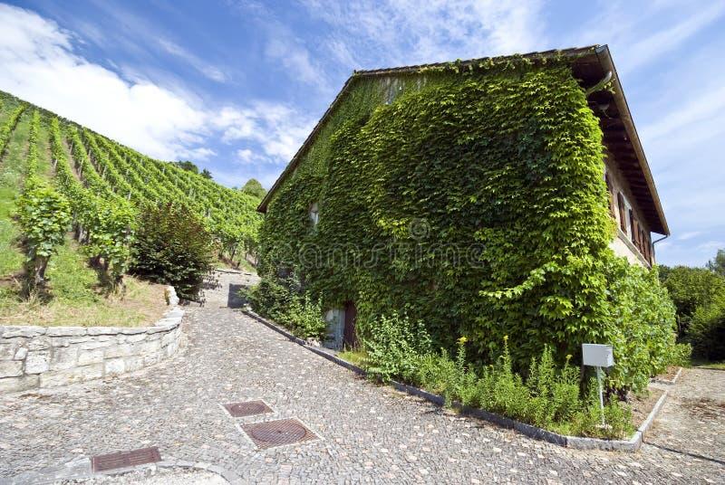 Zwitsers huis met wijnstokken stock afbeelding