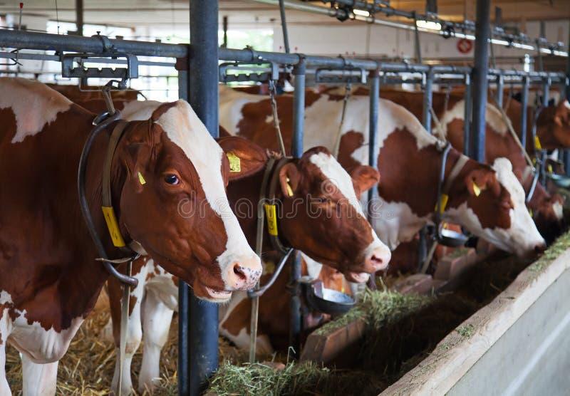 Zwitsers landbouwbedrijf stock foto's