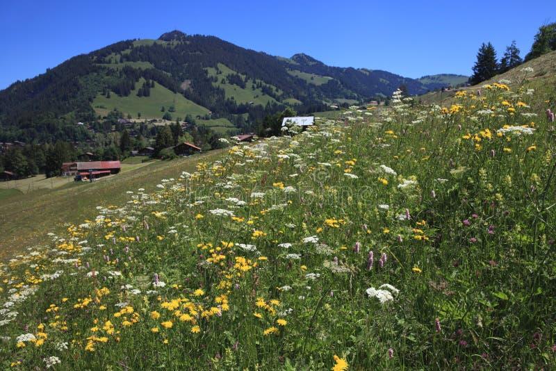 Zwitserse Alpen stock fotografie