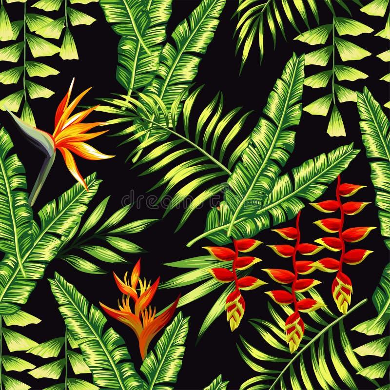 Zwrotników drzewka palmowe i rośliny royalty ilustracja