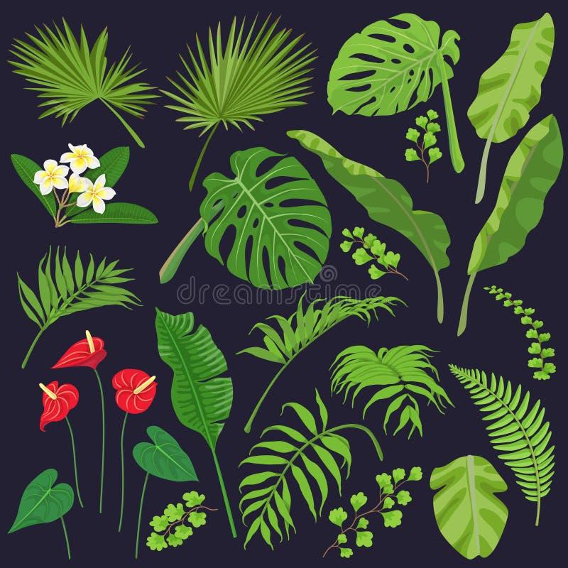 Zwrotników kwiaty i ilustracja wektor