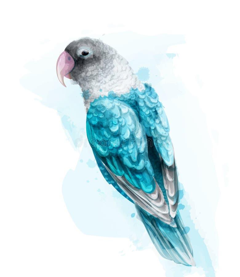 Zwrotnik kolorowa papuzia ptasia Wektorowa akwarela Śliczna ptasia ilustracja błękit barwi splashs ilustracja wektor
