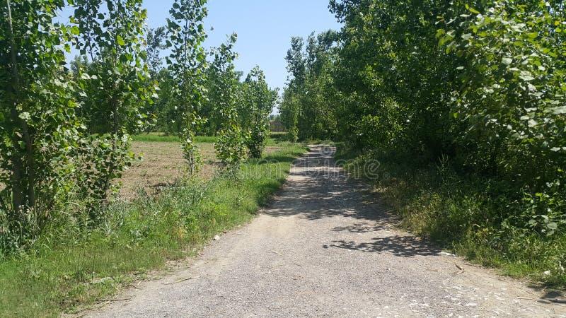 Zwyczajny spos?b lub spaceru spos?b z drzewami na stronach dla jawnego spaceru zdjęcia royalty free