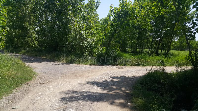 Zwyczajny spos?b lub spaceru spos?b z drzewami na stronach dla jawnego spaceru fotografia royalty free