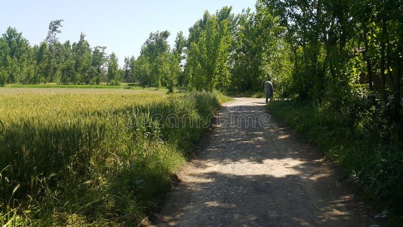 Zwyczajny spos?b lub spaceru spos?b z drzewami na stronach dla jawnego spaceru obraz stock