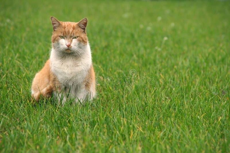 zwykła kota fotografia royalty free