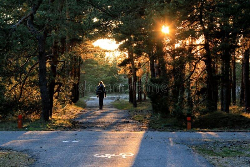 Zyklusweg in einem Kiefernwald auf dem Curonian-Spucken stockbild