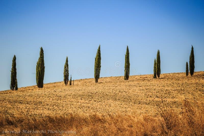 Zypern-Bäume in Toskana, Italien stockfotos
