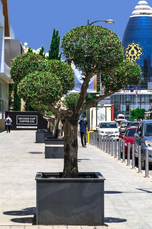 ZYPERN, NIKOSIA - 10. JUNI 2019: Stadtstraße mit Büro amerikanischer Universität von Zypern AUC Nord-Zypern Blumenbeet mit a stockbilder