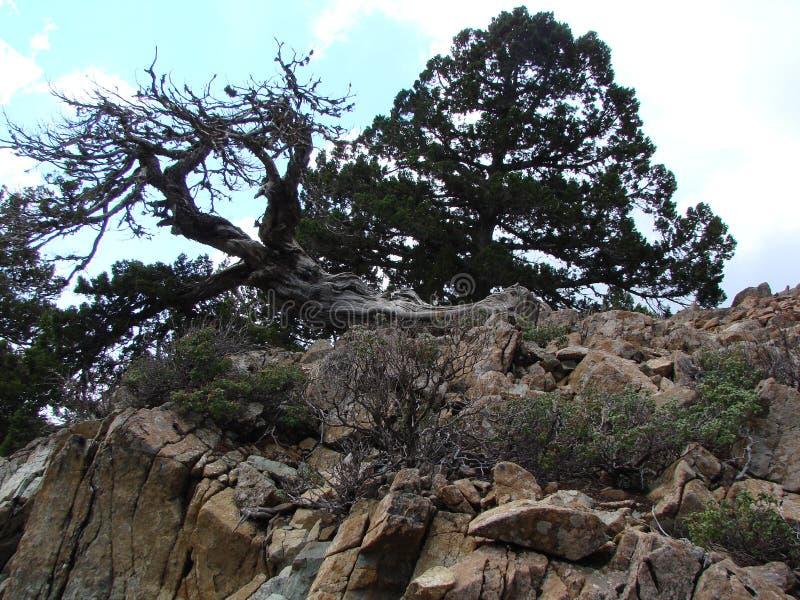 zypern Troodos-Berge Panorama von wilden Gebirgsw?ldern an einer H?he von 1900 Metern ?ber Meeresspiegel stockbilder