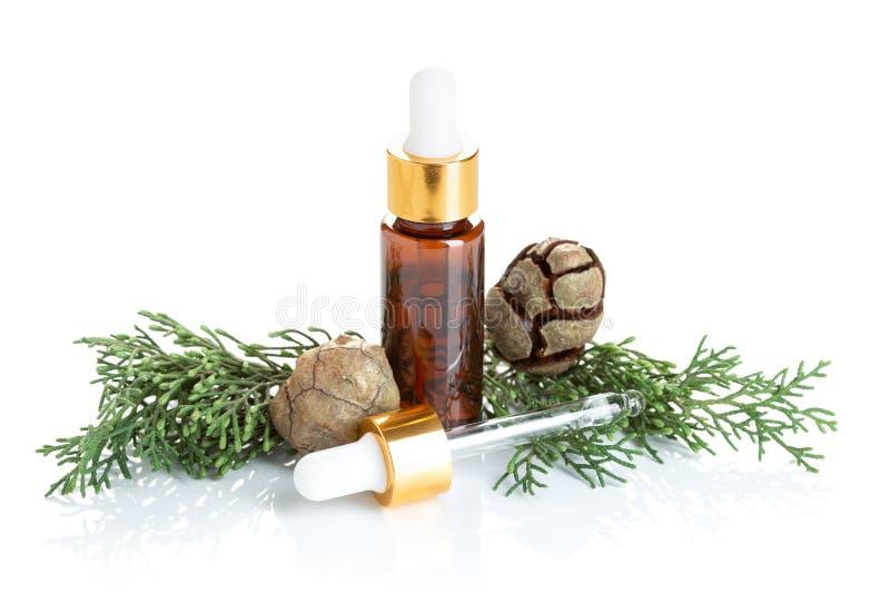 Zypresse-ätherisches Öl lokalisiert auf weißem Hintergrund lizenzfreies stockfoto