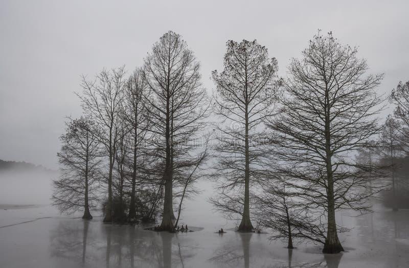 Zypresse-Bäume eingefroren im Eis und in Nebel eingehüllt stockbilder