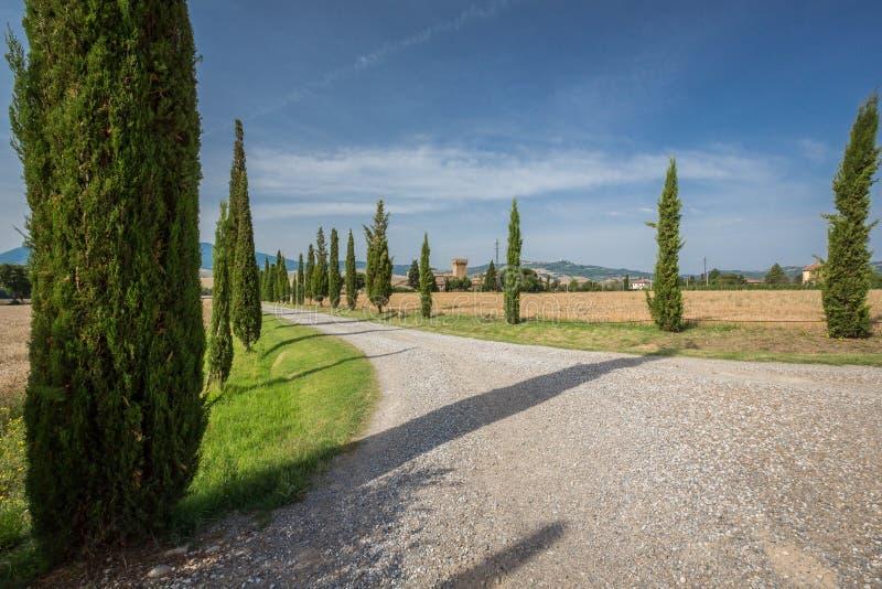 Zypresse-Baumlinie Fahrstraße umgeben durch Weizenfelder in Toskana, Italien stockbilder