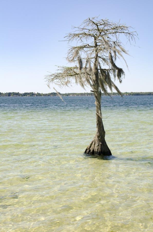 Zypresse-Baumschattenbild im klaren Wasser am See lizenzfreie stockfotografie
