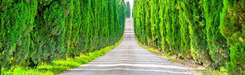 Zypresse-Gasse mit ländlicher Landstraße, Toskana, Italien Panoramische Ansicht lizenzfreie stockbilder