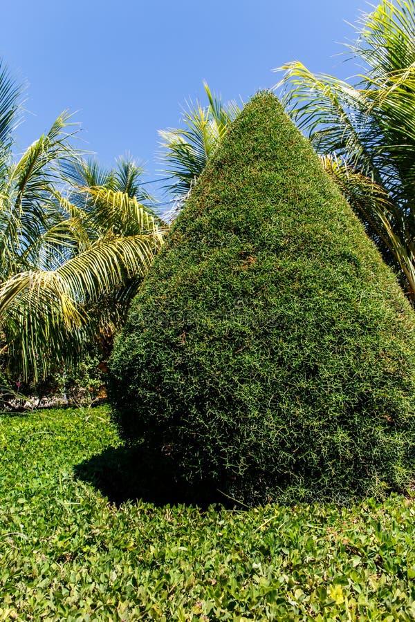 Zypresse mit Palmen von einem Garten lizenzfreies stockfoto