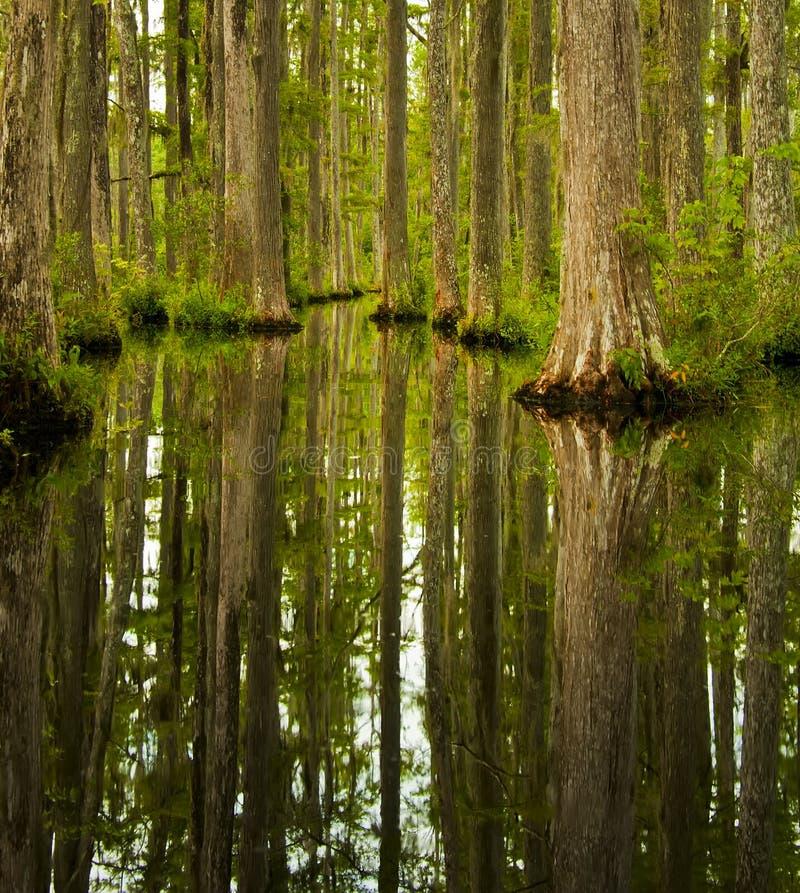 Zypresse-Sumpf lizenzfreies stockbild