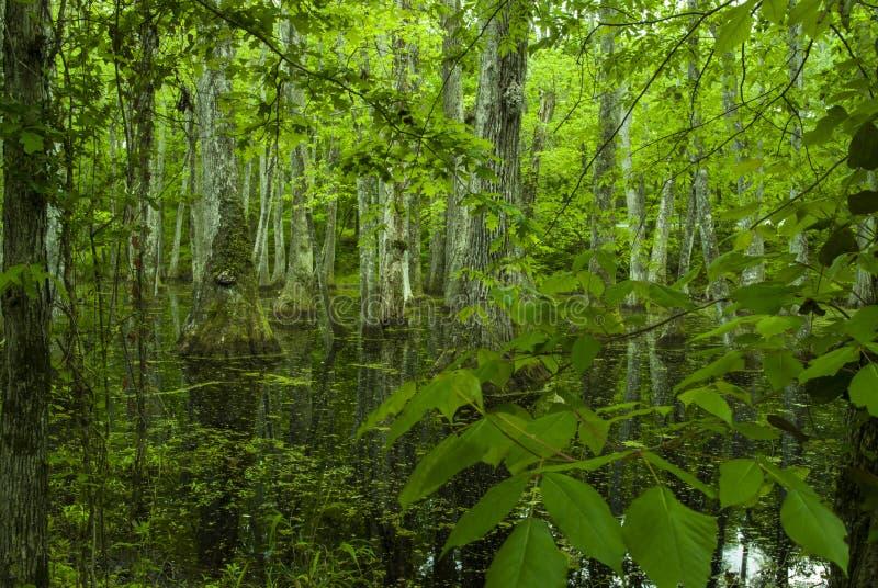 Zypresse-Sumpf, Natchez-Spur, Mitgliedstaat stockfotos
