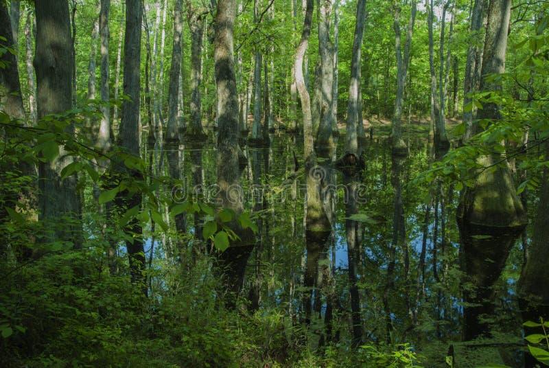 Zypresse-Sumpf, Natchez-Spur, Mitgliedstaat lizenzfreies stockbild