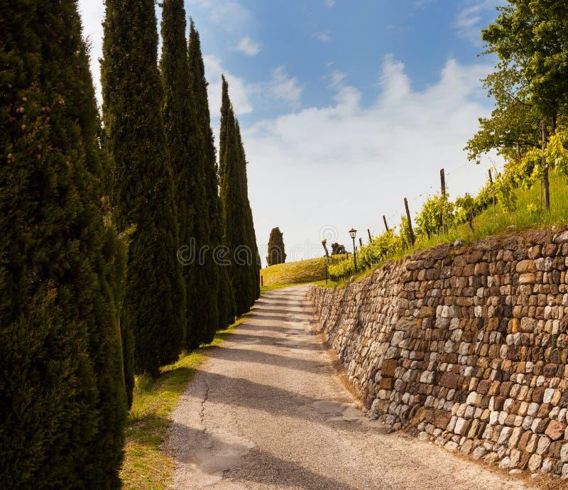 Zypresse und Steinwand, Fagagna stockfoto